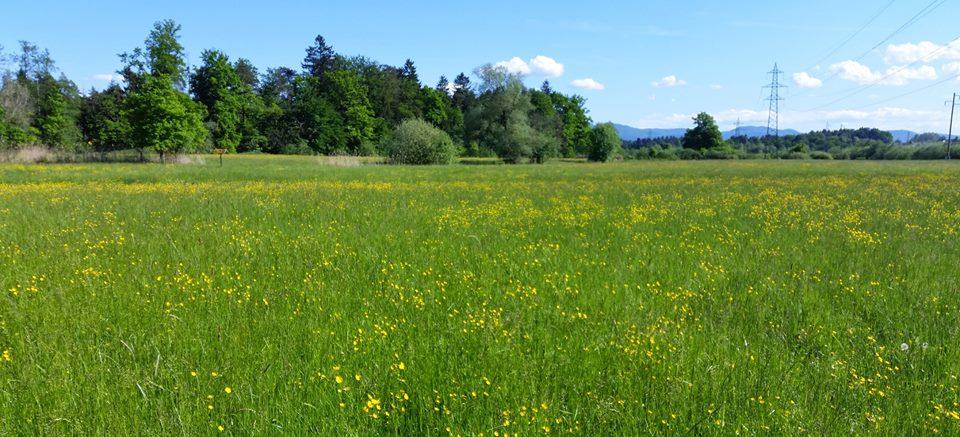 Ob travniku